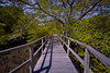 Walk With Me (tropicaLiving - Jessy Eykendorp) Tags: bali seascape green nature forest indonesia landscape mangrove denpasar walkwithme efs1022mmf3545usm outdoorphotography canoneos50d hoyandx400 rawproccessedwithdigitalphotopro tiffproccessedwithadobephotoshopcs3 mangroveinformationcenterofdenpasarbali