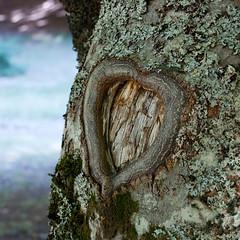 P&R. Once upon a time.. (the_lighter) Tags: tree heart carving romantic save5 albero cuore legno corteccia iscrizione platinumheartaward camporotondo