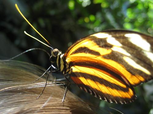 Butterfly Garden 025