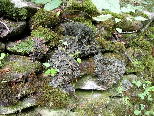Stone Wall - Cades Cove