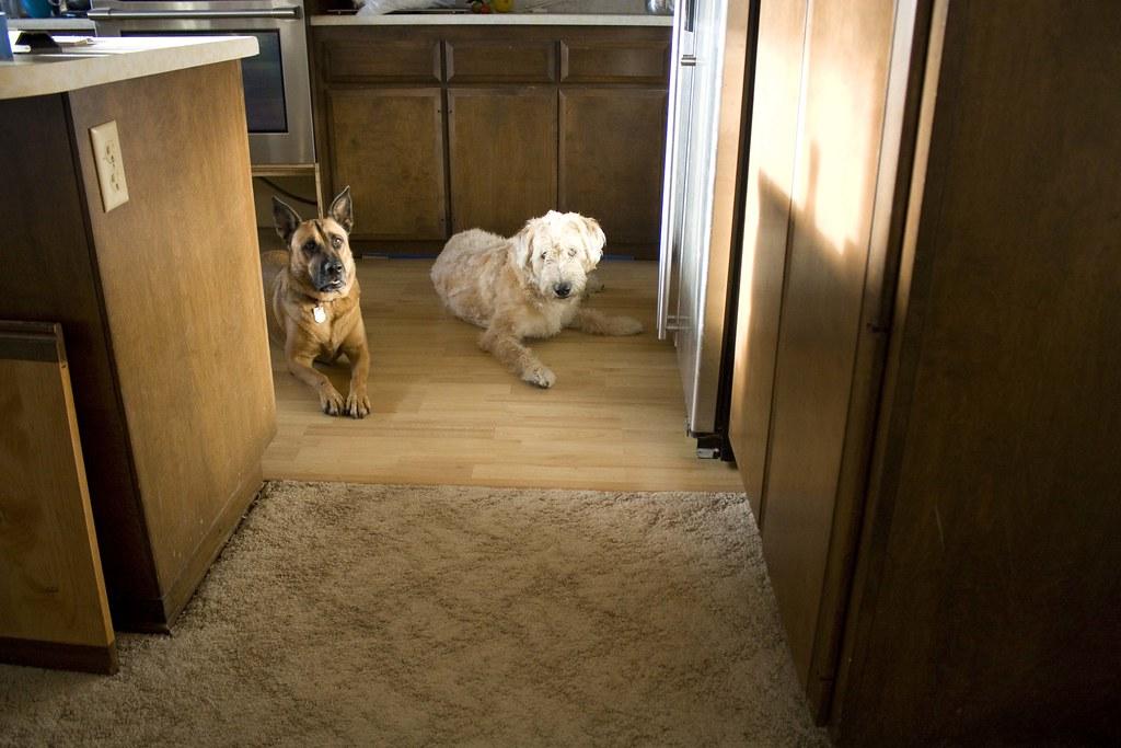 new kitchen floor sneak peek
