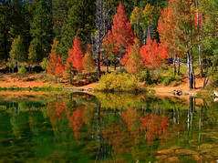 Aspen Mirror Lake (ayresphotography) Tags: leica city autumn red lake color reflection green fall leaves lumix mirror utah ut montana flickr mt crystal missoula cedar aspen classique naturesfinest dmcl1