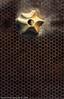 Abstraction (hamad alkhamees حمد الخميس) Tags: brown star abstraction kuwait hamad حمد كويت أمل الخميس بني تجريد خلايا خليه نجمه alkhamees تجريديه