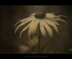 Art Work Design (oliver's | photography) Tags: friends flower macro texture nature fauna photoshop work canon germany eos flora flickr raw moody oliver image awesome tripod natur  adobe frame processing dslr blume makro blte soe rahmen nahaufnahme treatment copyrighted stativ giottos aworkofart supershot beautifulshot pixelwork canonef100mmf28macrousm outstandingshots totalphoto photographyrocks canoneos50d colorphotoaward flickraward photoscape flickrdiamond artworkdesign eliteimages theperfectphotographer thebestofday adobephotoshopcs4 qualitypixels flickrlovers photographersgonewild doubledragonawards artofimages oneofmypics flickraward phoddstica pixelwork09photography oliverhoell giottosmtl9251bmh50013waypanhead allphotoscopyrighted