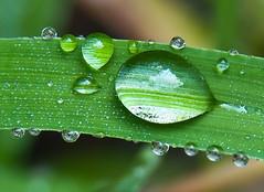 Grass Droplets 4