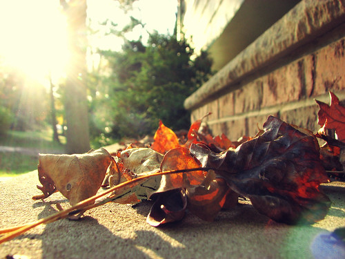 Fall, with a vintagey tint