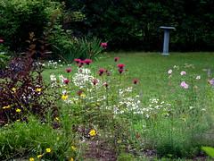 P1020611 (lovesdahlias 1) Tags: flowers summer gardens favoritegarden lovesdahlias1
