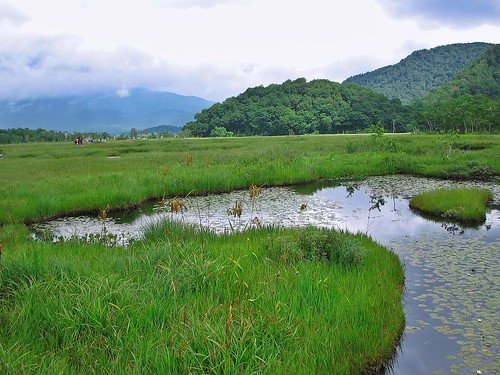 Marshland at Oze