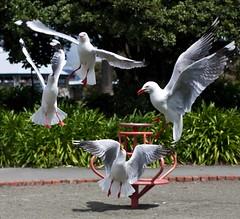 Nelson, NZ (C) 2009
