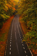 From above (mendhak) Tags: road bridge autumn red wallpaper orange brown black netherlands leaves truck eagle path foliage strap tall soaring tale tar unbelievable lightroom fail sooc mendhakwebsite