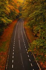 From above (mendhak) Tags: road bridge autumn red wallpaper orange brown black netherlands leaves truck eagle path foliage strap tall soaring tale tar unbelievable lightroom fail sooc mendhakwebsite
