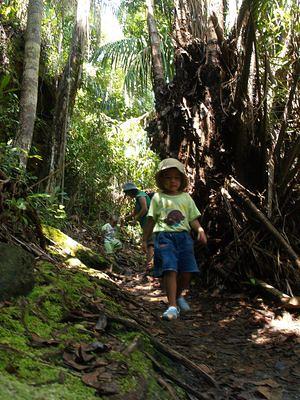 Telok Paku trail