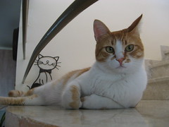 IMG_2948 (Levana's Cats =^..^=) Tags:   levana   shifman