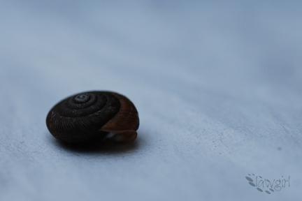 tiny_shell[2009]