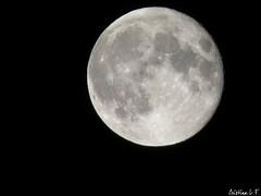 Full Moon Sways. (Xanetia) Tags: fullmoon lunallena project365 january2009 enero2009