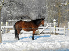 Are you looking at ME? (**Ms Judi**) Tags: trees winter light shadow horse snow cold cute beautiful beauty animal fence pose cool wire midwest looking sweet branches awesome adorable lovely magical breathtaking enchanting msjudi judistevenson