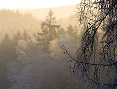 Dawn in the woods (Linda6769) Tags: morning winter mist tree germany landscape woods ast branch village cone hoarfrost thuringia twig larch landschaft spruce baum raureif conifer lrche zweig nadelbaum konifere larchtree brden lrchenbaum picturewithmusic