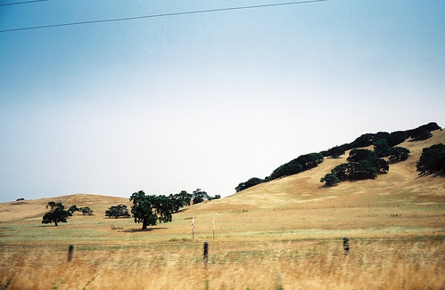 californiadrygrassview