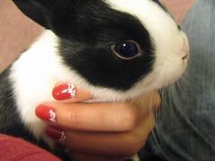 My Lovely schnitzel baby (Rubyran) Tags: rabbit bunny conejo coelho lapin schnitzel kaninchen coniglio rubyran kuneho
