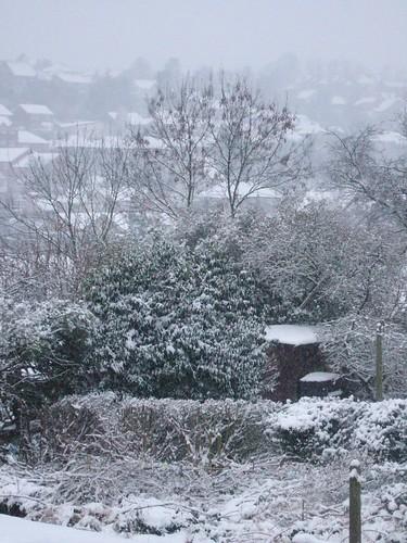 snow feb 5 2009 015