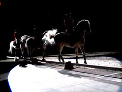 dark action (MoVo18) Tags: horses
