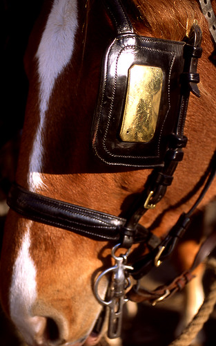 Horse, Colonial Williamsburg. (Fuji Provia 100F. Nikon F100. Epson V500.)