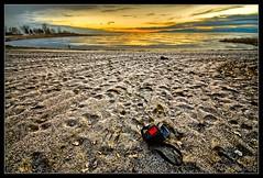 Abandoned :: HDR (|sumsion|) Tags: sunset usa abandoned bag landscape interesting sand nikon tripod explore february 2009 hdr highdynamicrange bracketing sigma1020mm d90 willardbay photomatix flickrexplore digitalblending tonemapped sumsion explored nikond90 |sumsion| sumsioncom