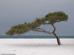 Snow on the beach... (RoniM) Tags: sea snow beach island croatia e3 roni bol 2009 brac dalmatia zd zlatnirat explore30 marinkovic interestigness30 1260mm ronimarinkovic snijegubolu