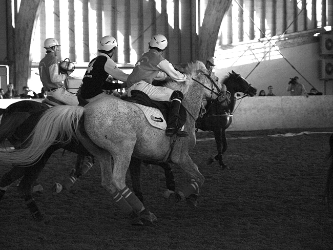 horseball-4