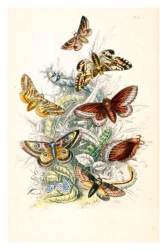mariposa14