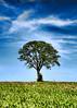 Tree project (by Yo Spiff)