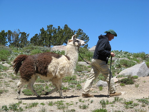 A man and his llama