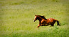 Horse (h.ludens) Tags: horse nikon d90 theunforgettablepictures tup2