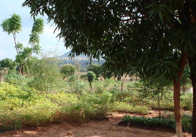 tree nursery 5