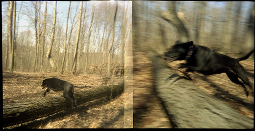 Bela Flying Diptych
