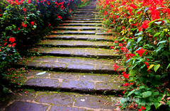 Step up (Pkamo@Tai) Tags: trip travel flowers red green nature beautiful thailand stair tour fresh step thai chiangmai  puykamo bhubingpalace
