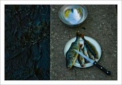 frukost (Anders Mohlin) Tags: sverige vr fiske fritid gnesta srmland lillasigtuna
