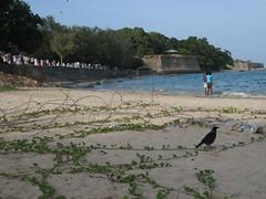 Dutch Bay Beach, Trincomalee (evanklavon) Tags: sri lanka trincomalee