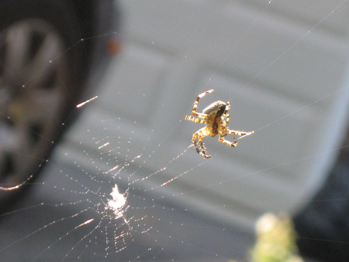 found a spider spinning a web
