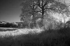 ASDIM8542 (morgan.adrian) Tags: trees landscape ir cotswolds gloucestershire infrared backlit r72 sigmasd14