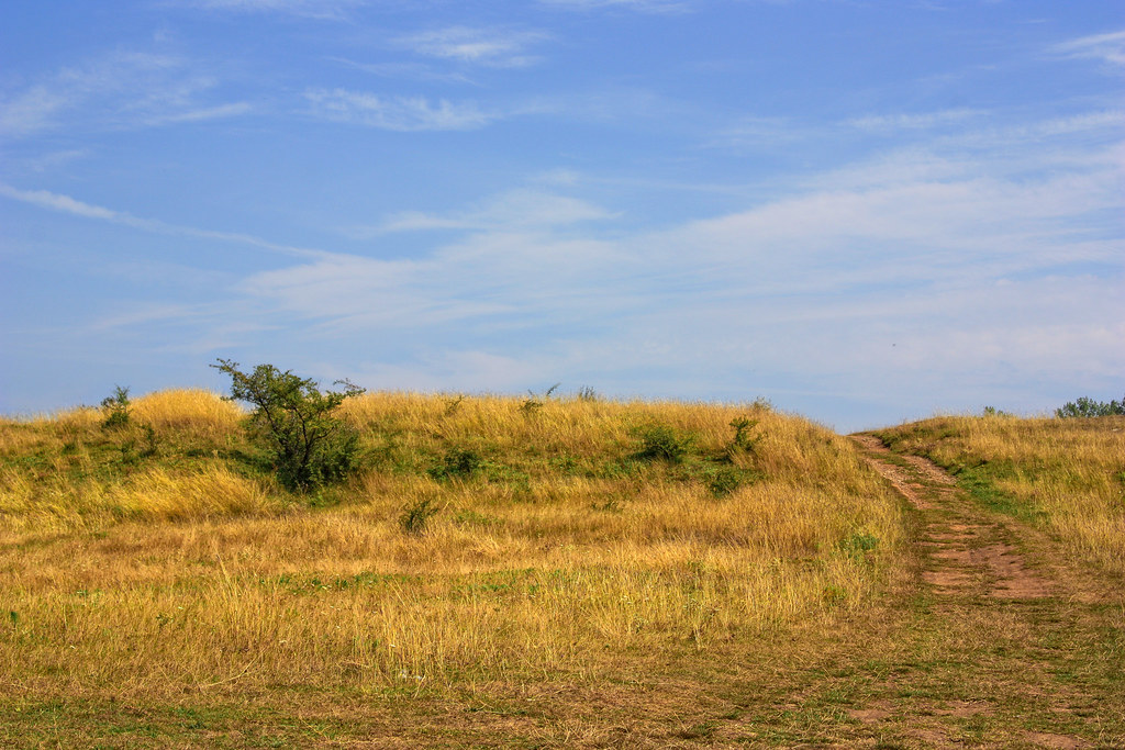 yellowish landscape
