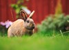 button portrait 2 (felt_tip_felon®) Tags: pet rabbit bunny animal mammal ears whiskers button lapin