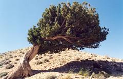 (Esmaeel Bagherian) Tags: tree nature iran