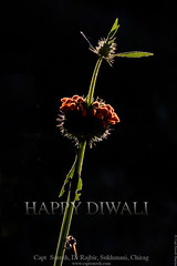 HAPPY DIWALI - say with flowers, NOT with crackers ! (Captain Suresh Sharma) Tag