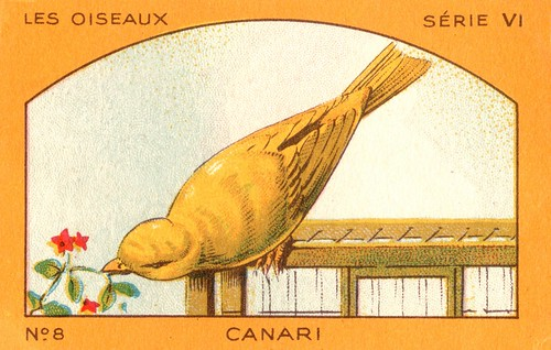 milliat oiseaux008