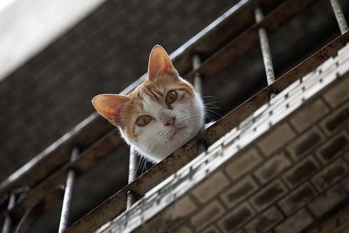 フリー写真素材, 動物, 哺乳類, 猫・ネコ,