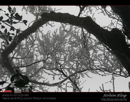 你拍攝的 20090110數位攝影_拉拉山外拍188.jpg。