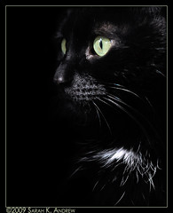 Bryan the Cat (Rock and Racehorses) Tags: black green cat blackcat eyes chat noir nj kitty explore bryan greeneyed blackcatbrigade bestofcats sarahkandrew ska3263