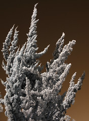 False Color IR