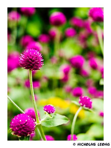 Spiky purple..